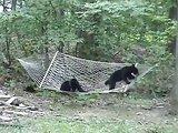 Des ours qui aiment le hamac