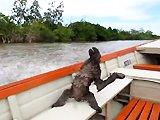 Paresseux sur un bateau