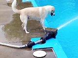 Un chien qui joue avec un tuyau d'arrosage