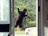 Un chat qui veut rentrer chez lui