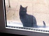 Un chat veut rentrer chez lui