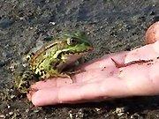 La chasse à la grenouille en Russie