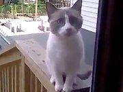 Un chat qui demande à rentrer chez lui