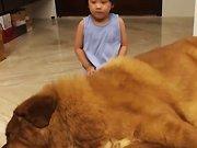 Une fillette fait un câlin à un gros chien