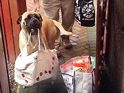 Un chien qui aide à porter les courses