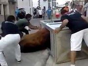 Un taureau coincé dans une cabine…