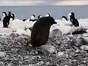 La mauvaise journée d'un pingouin