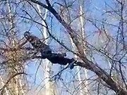 Un homme russe grimpe dans un arbre