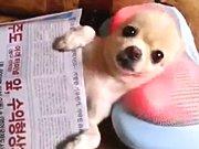 Un chien se détend avec son coussin massant