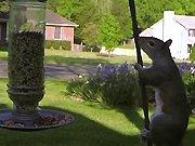 Une GoPro filme le fail d'un écureuil