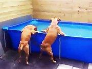 Un chien récupère son jouet au fond d'une…