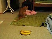 Un chat qui n'aime pas les bananes