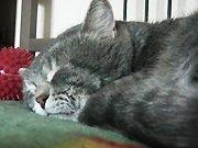 Un chat râle lorsque son maitre tousse
