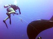 Un pêcheur sauve la vie d'une raie manta