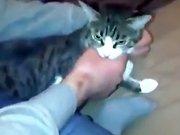 Un chat russe attaque un homme
