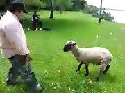 Un ivrogne se fait calmer par un mouton