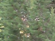 Un chasseur a tué Noël - Rémi Gaillard
