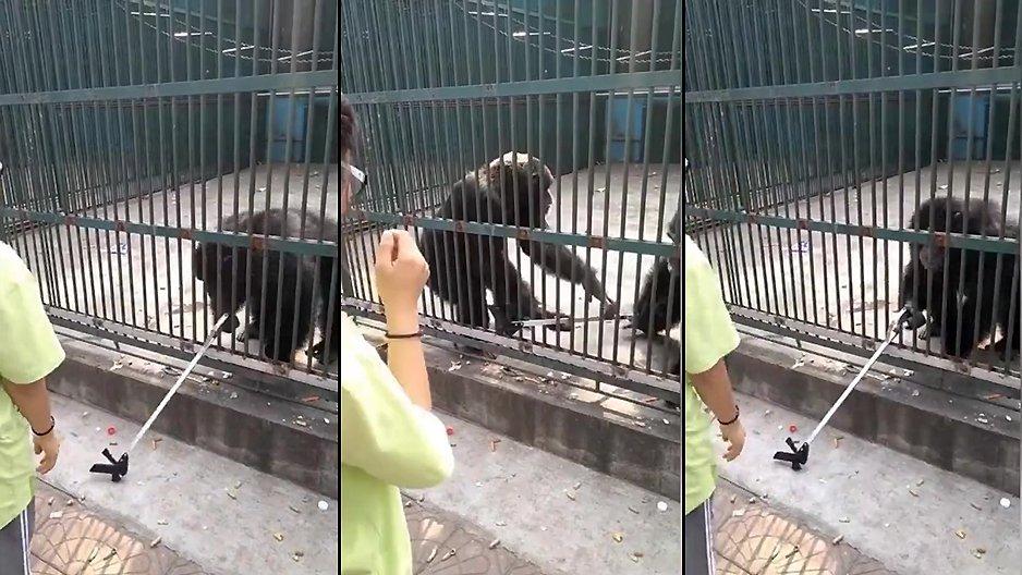 Un singe ramène une perche à selfie que son pote avait volé
