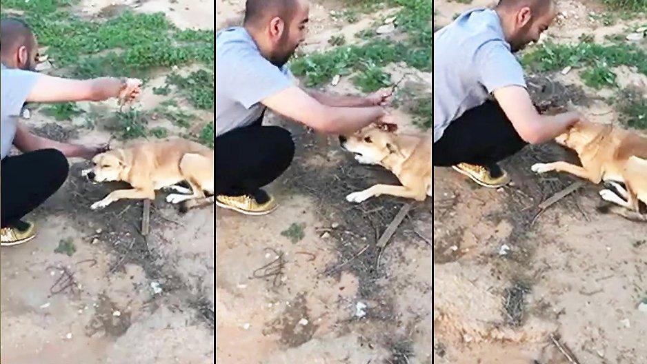 Un chien demande de l'aide à un homme