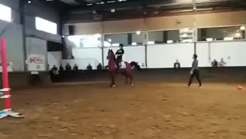 Un cheval qui n'avait pas envie