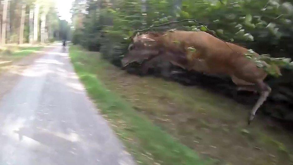 La rencontre WTF d'un cycliste