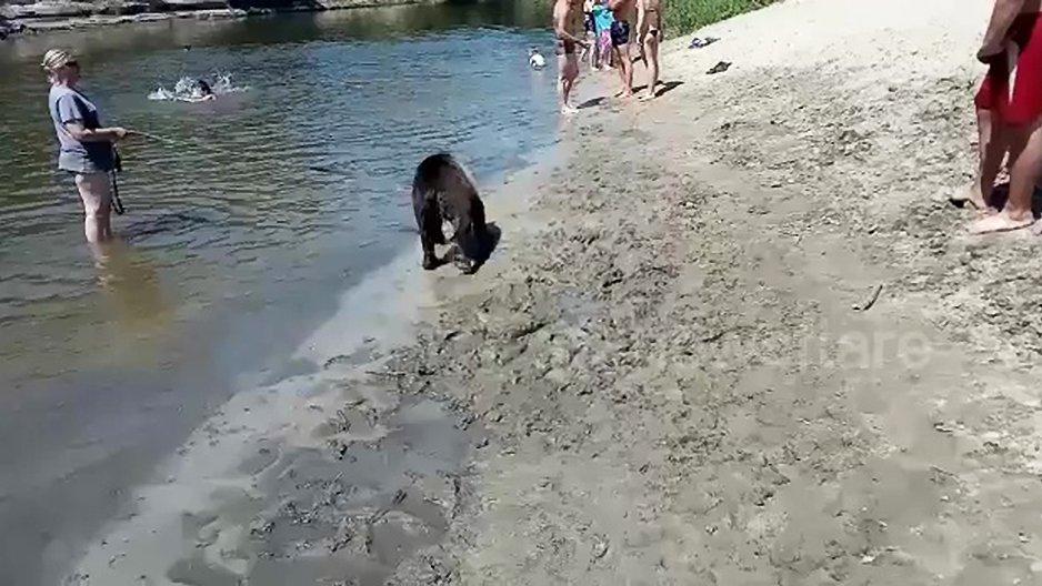 Une femme russe qui promène son ours