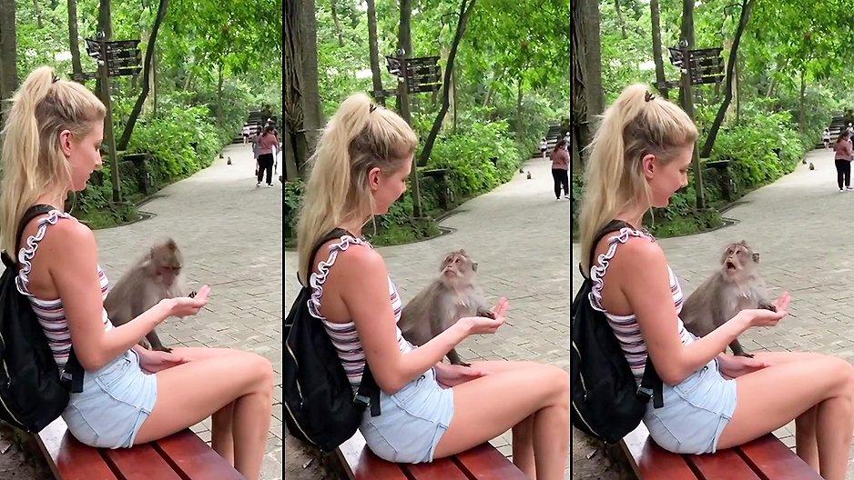 Une blonde fait une blague à un singe