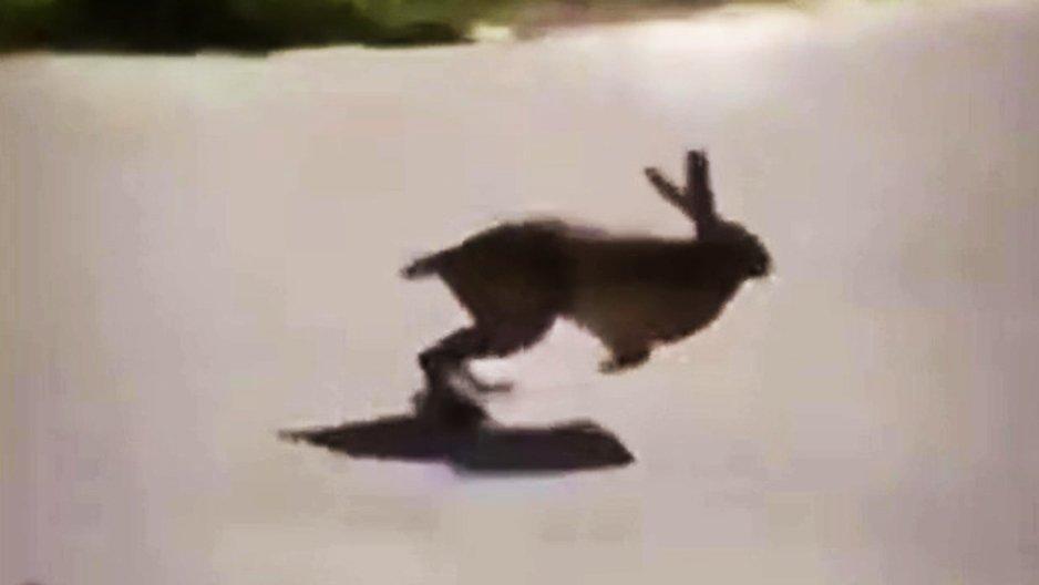 Un lapin sur Google Map
