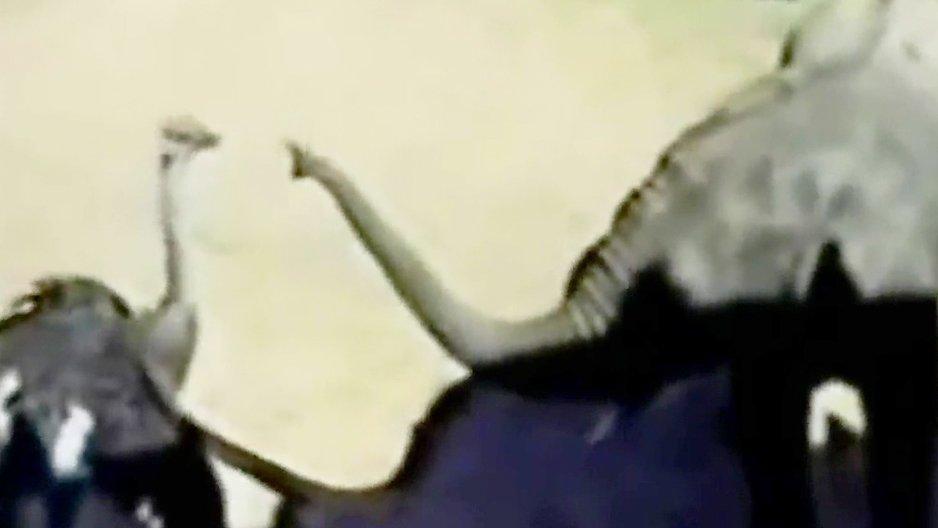 Un éléphant qui trolle une autruche