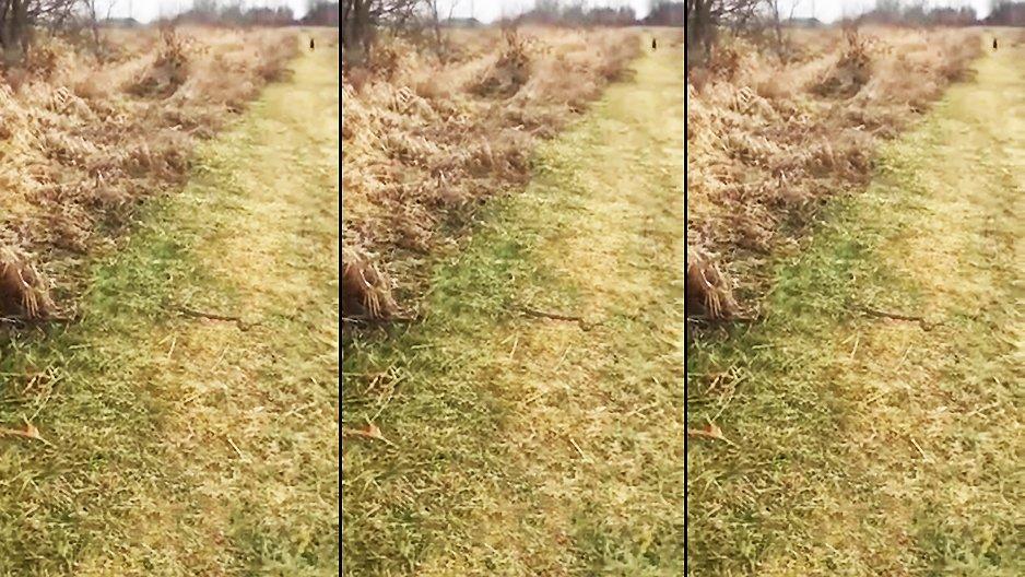 Un chien croise un serpent durant sa promenade