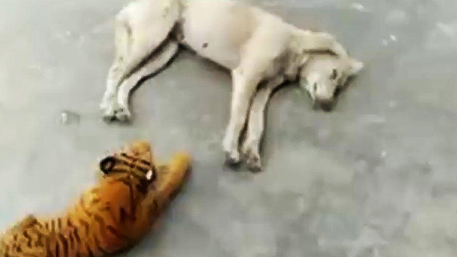 Frayeur d'un chien au réveil