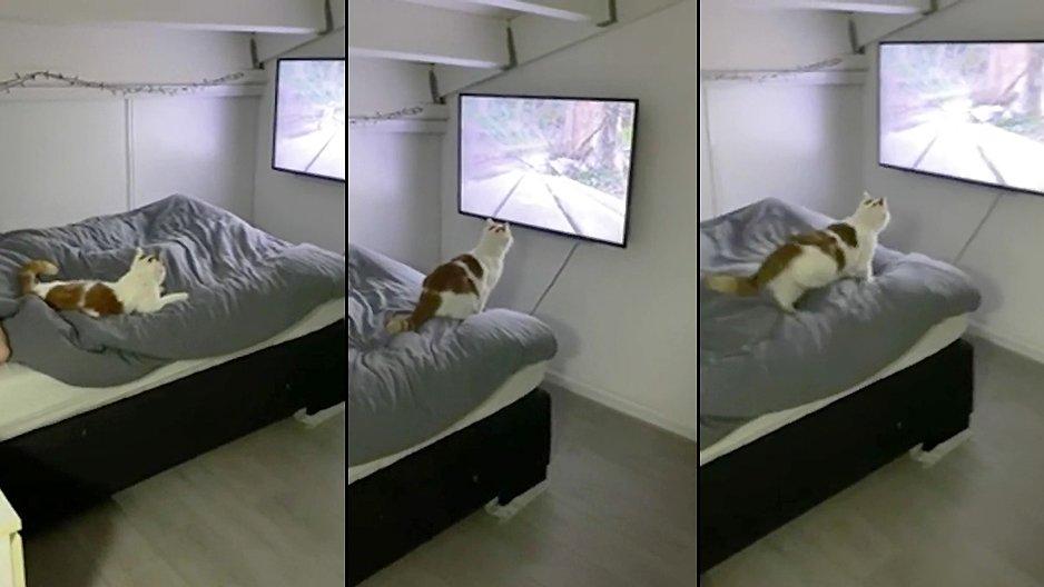Un chat qui regarde la télé