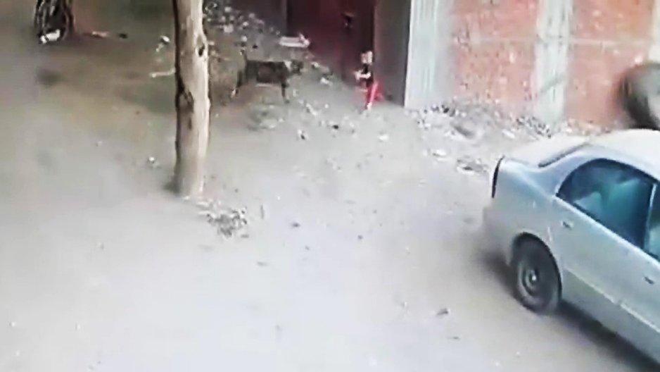Un chat sauve un petit garçon