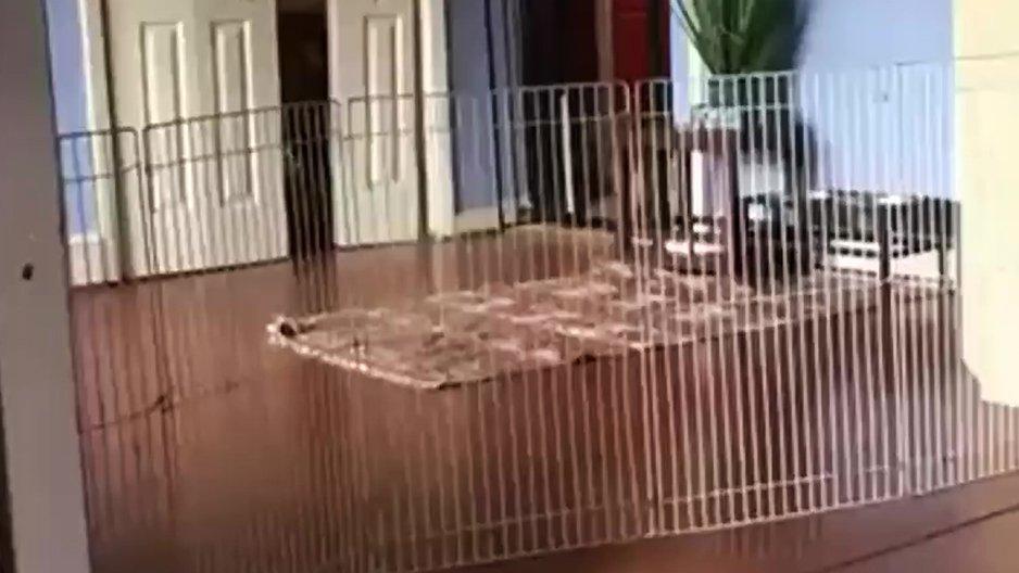 Empêcher un chien d'aller dans le salon