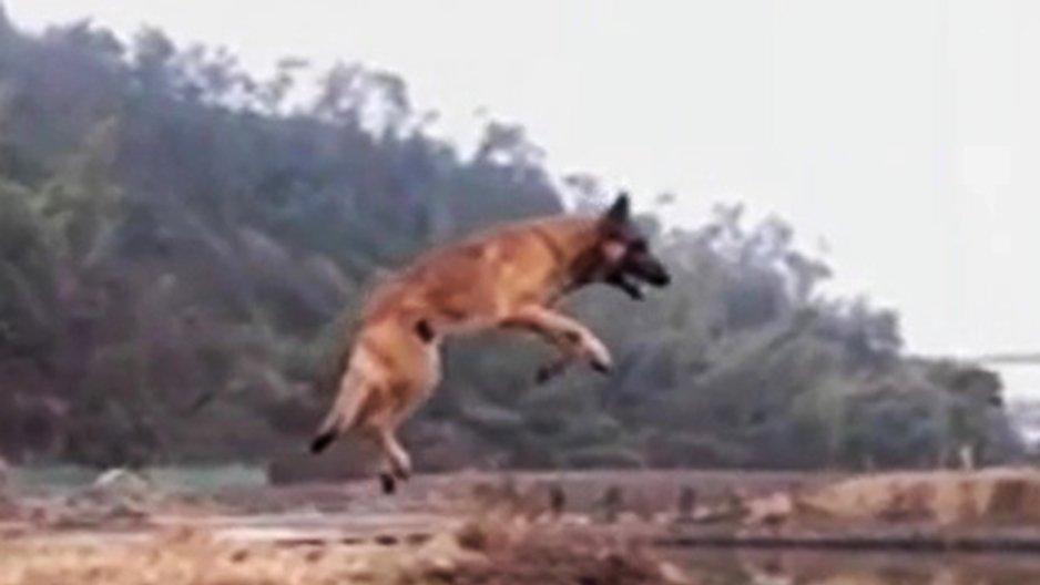 La magnifique détente d'un chien