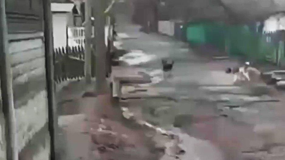 Le courage d'un chien qui monte la garde