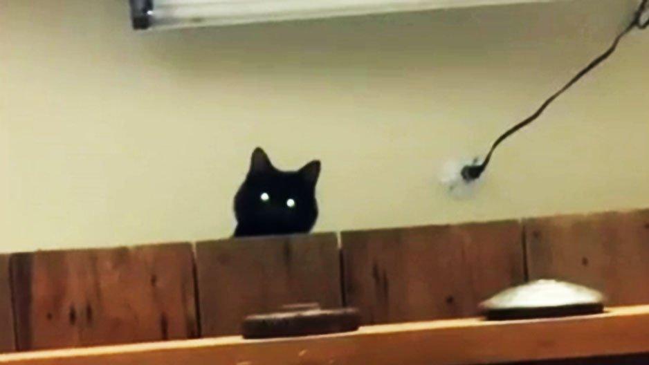 Le chat, cet enfoiré !
